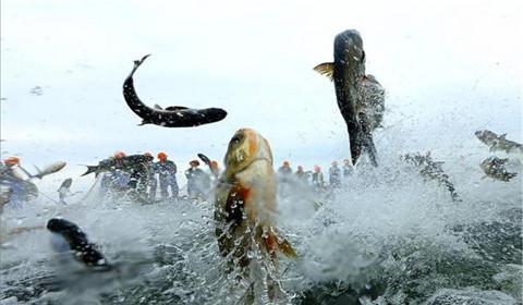 浙江千岛湖巨网捕鱼万鱼跃起