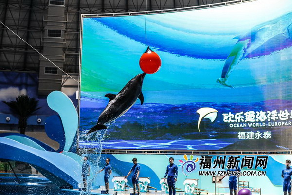 """在""""山里看海""""福州永泰欧乐堡海洋世界国庆试营业"""