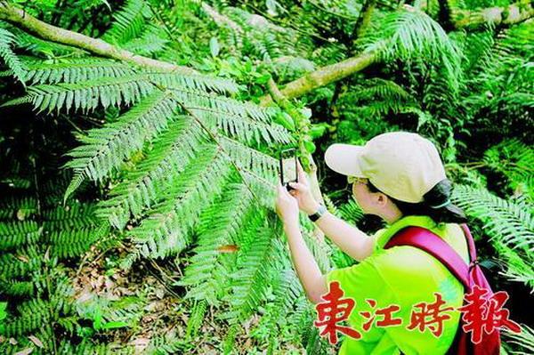 """""""袖珍""""保护区藏着大生态圈古田省级自然保护区被誉为""""北回归线上的绿宝石"""""""